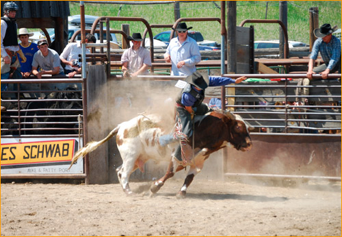 Bull riding at the methow Valley Rodeo